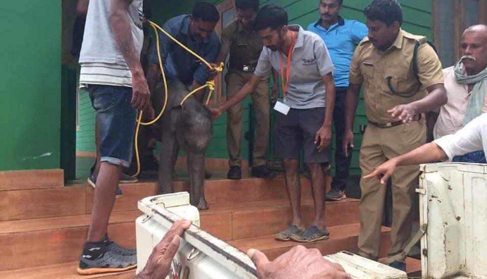 Elephant Calf Rescue